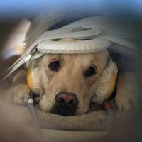 Dog MRI - Copy (200x200)