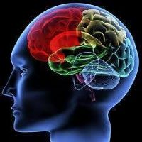 Brain (200x200)